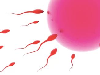 донорство яйцеклітин