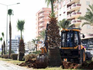 Copacii nu au fost uitați în Forum Interchange Project