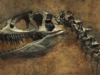 bilim insanlari tibette milyon yil oncesine ait dinozor izi buldu