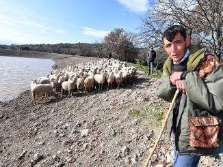 Livestock of drinking water goals revived in Izmir