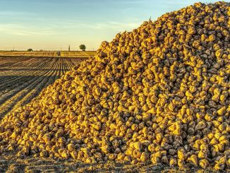 All-Time Record for Beet and Sugar Production Broke
