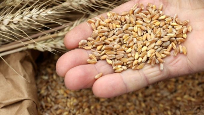 What are the characteristics of the ancestral seed?
