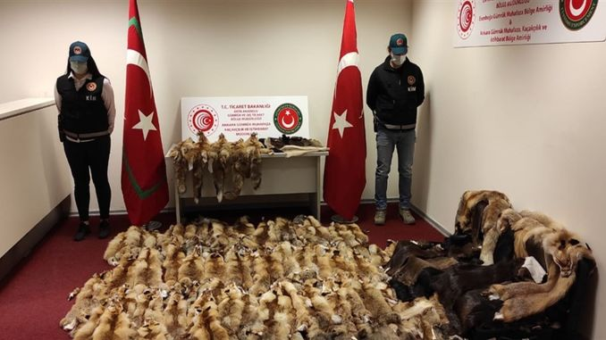 Seized fox and beaver hide at Esenboga airport