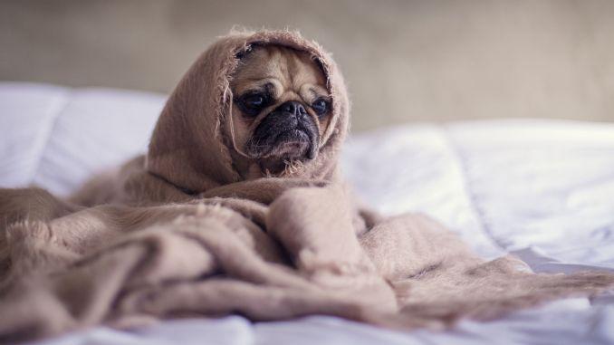 Leitfaden zur Pflege von Haustieren