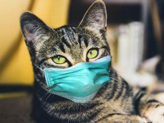 A Kktcde kedvtelésből tartott macska ápolt gazdájától