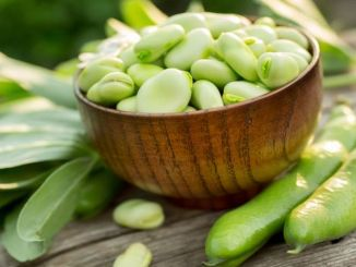 benefits of fresh broad beans