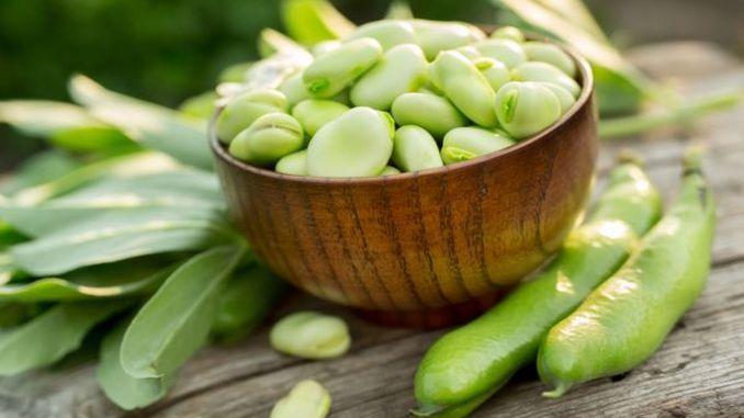 benefits of fresh broad beans
