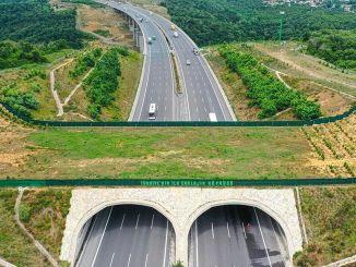 ハイウェイは生態学的な橋で野生生物を保護します