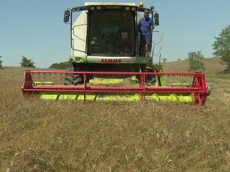 ibb fece il primo raccolto di grano su terre deserte