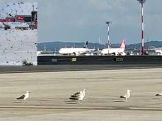 Cuộc xâm lược của châu chấu tại sân bay istanbul
