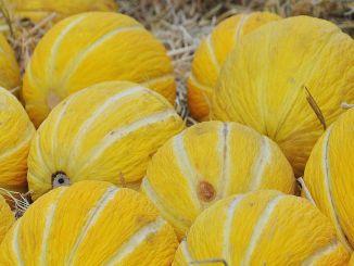 低热量维生素和矿物质含量的甜瓜的好处