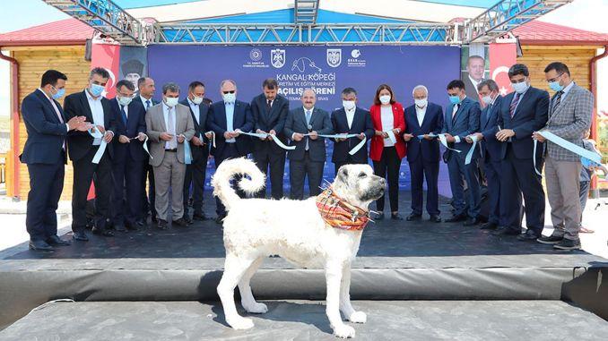 Kangal dog production and training center opened