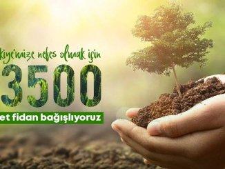 تتبرع tcdd بالشتلات للغابات المدمرة