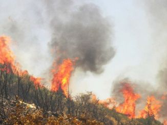 neueste Situation im Kampf gegen Waldbrände
