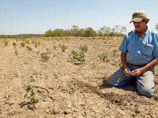 Kmetom, ki jih je poškodovala suša, bo izplačana podpora