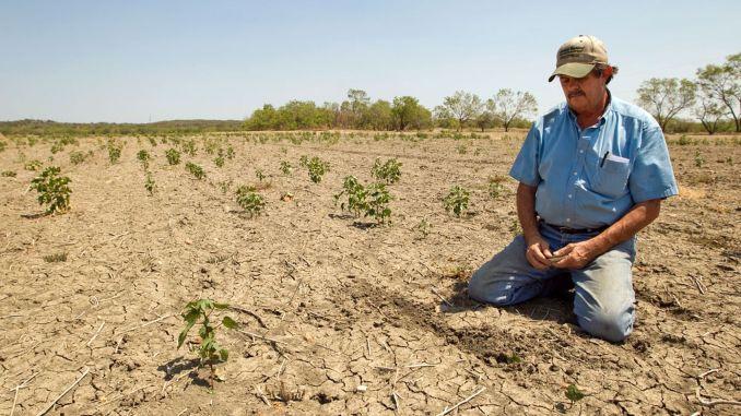 سيتم دفع الدعم للمزارع المتضرر من الجفاف