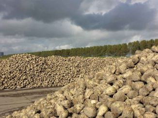 sugar beet purchase price has been announced