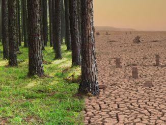 वैश्विक जलवायु परिवर्तन फोटोग्राफी प्रतियोगिता के विजेताओं का निर्धारण