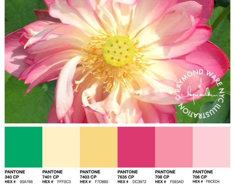 Pantone Palette Lotus