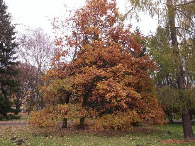 jesien-w-parku-jordana-25