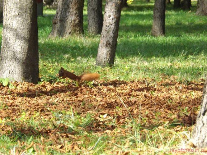 wiewiorka-park-jordana