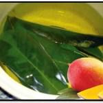 Como Usar Las Hojas De Mango Para El Cabello