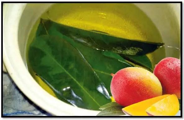 hojas de mango para el cabello