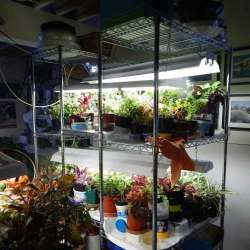 Tips and Trick to Make Indoor Greenhouse with Light   Raysa House