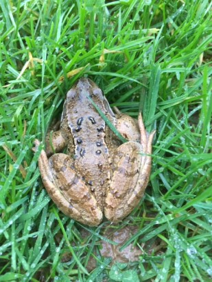 Yikes Mr Toad!