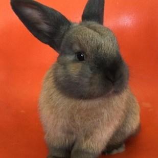 rabbit 5 (2)
