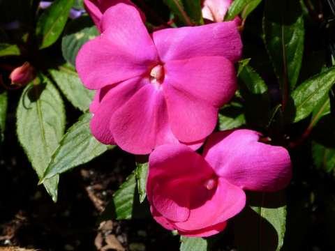 flower2_block1024