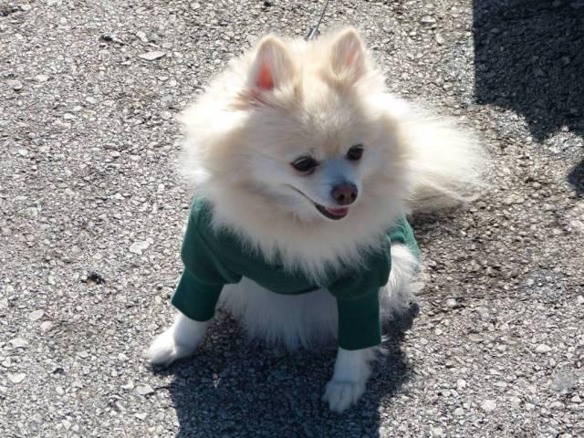 dog1 2014
