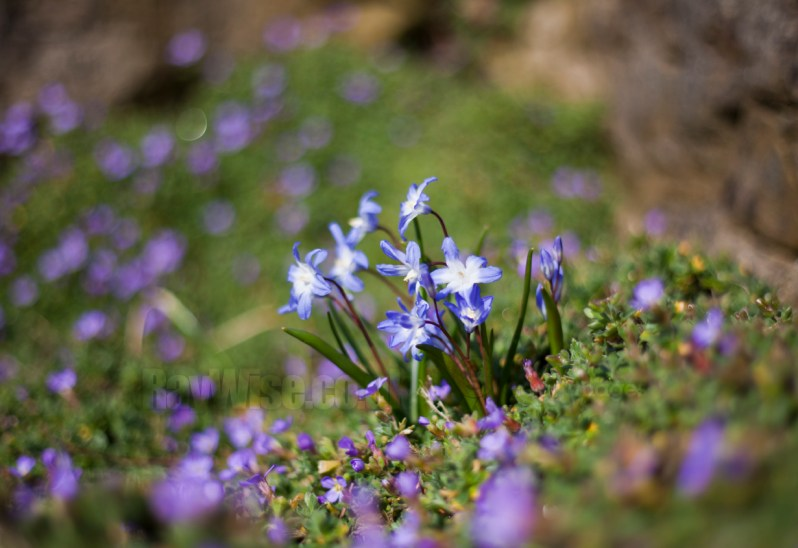 tiny flowers - macro