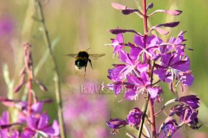 flower with bumble bee