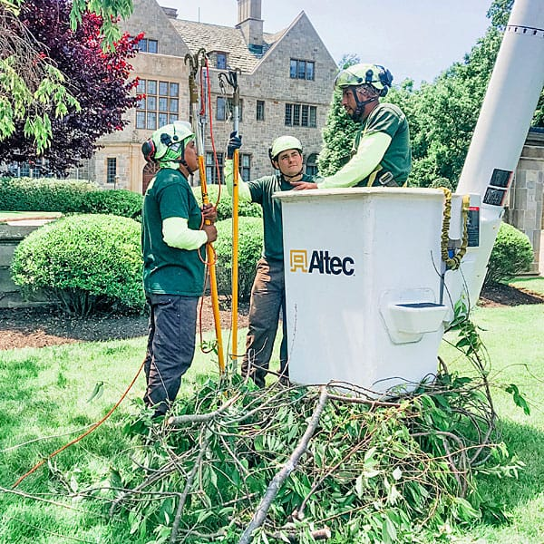 Rayzor's Edge Tree Service crew clearing pruned branches