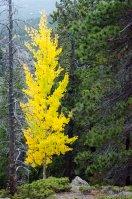 fall-colors-drive-2016-6723