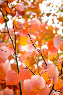 fall-colors-drive-2016-6741