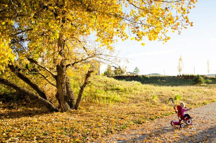 fall-photos-7032