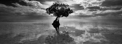 PHOTOGRAPHY – by Razvan Balotescu