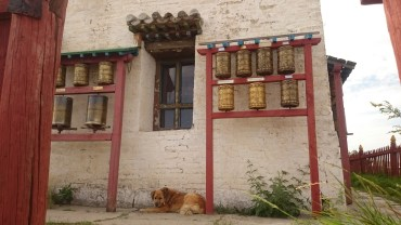 Dog chilling out under more prayer wheels
