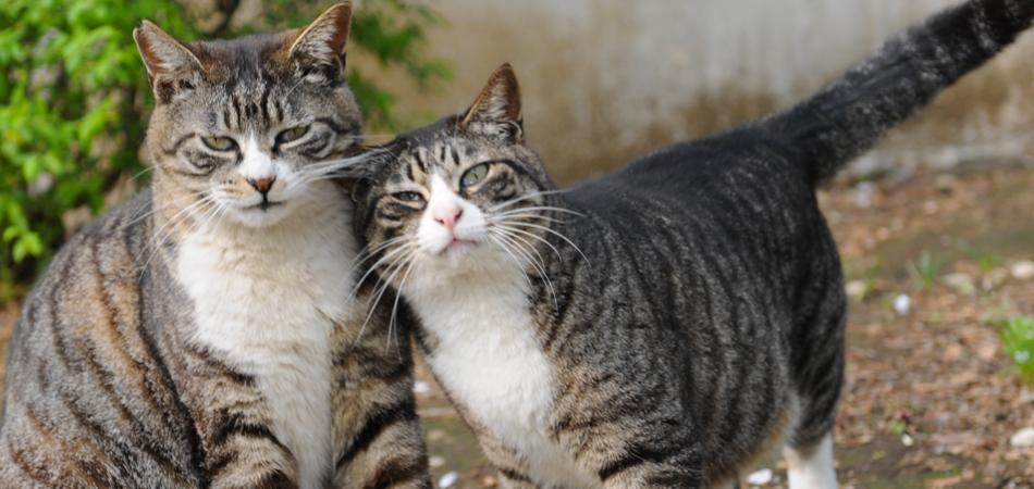 animais-companhia