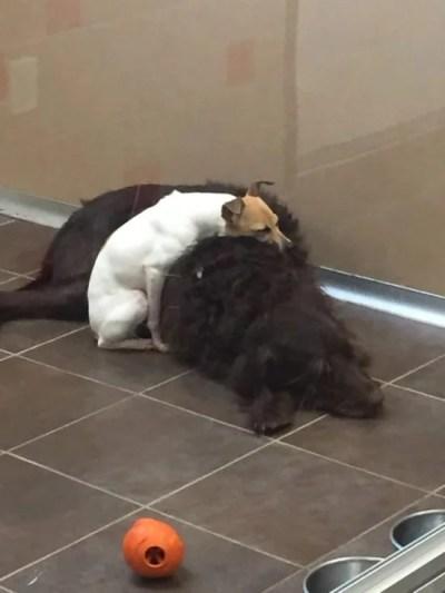 Cachorros abrigo adotados juntos paravam abraçar