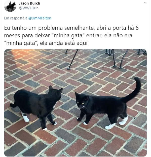 Tweet sobre dois gatos idênticos