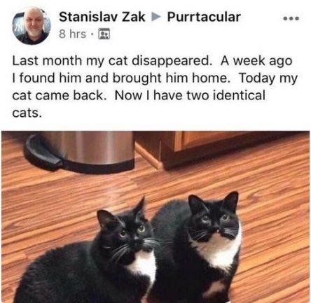 Imagem de print do twitter com dois gatos idênticos