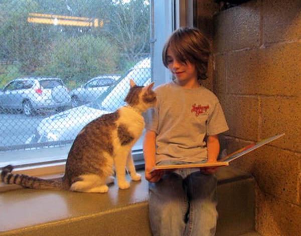 criancas-leem-gatos-abrigo-4