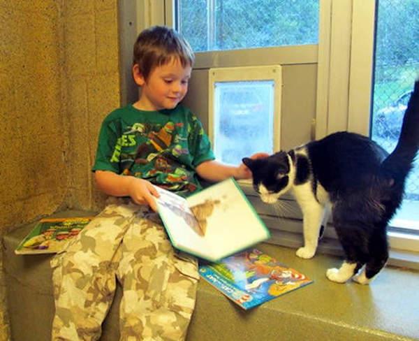 criancas-leem-gatos-abrigo-6