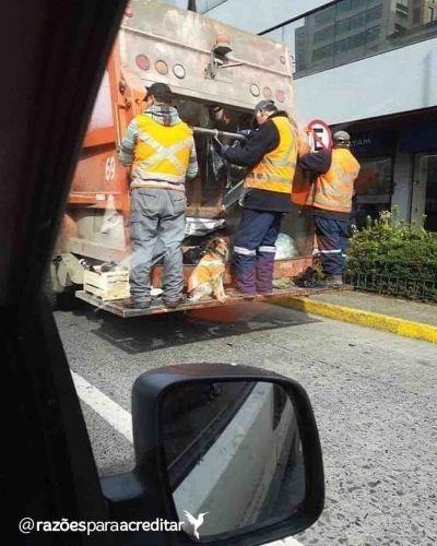 cachorro acompanha garis caminhão lixo