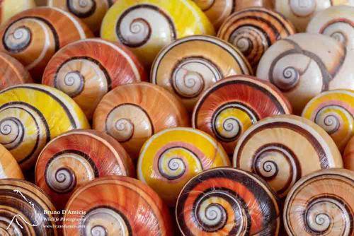 conchas caramujos pintados