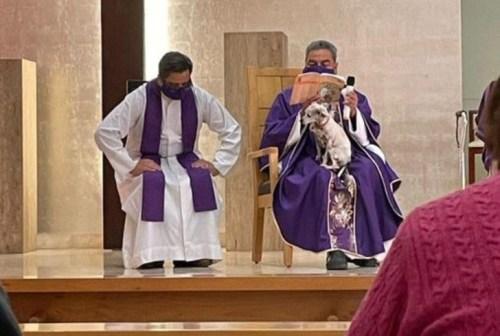 padre celebra missa cachorro colo