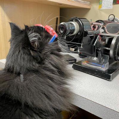 gatinha de óculos em ótica